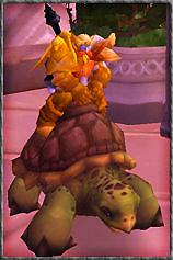Brakdür sur sa tortue !